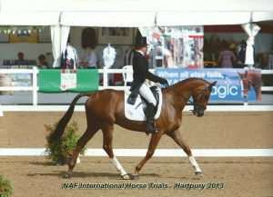 Harry_Hartpury_dressage.jpg